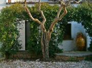 il-giardino-02